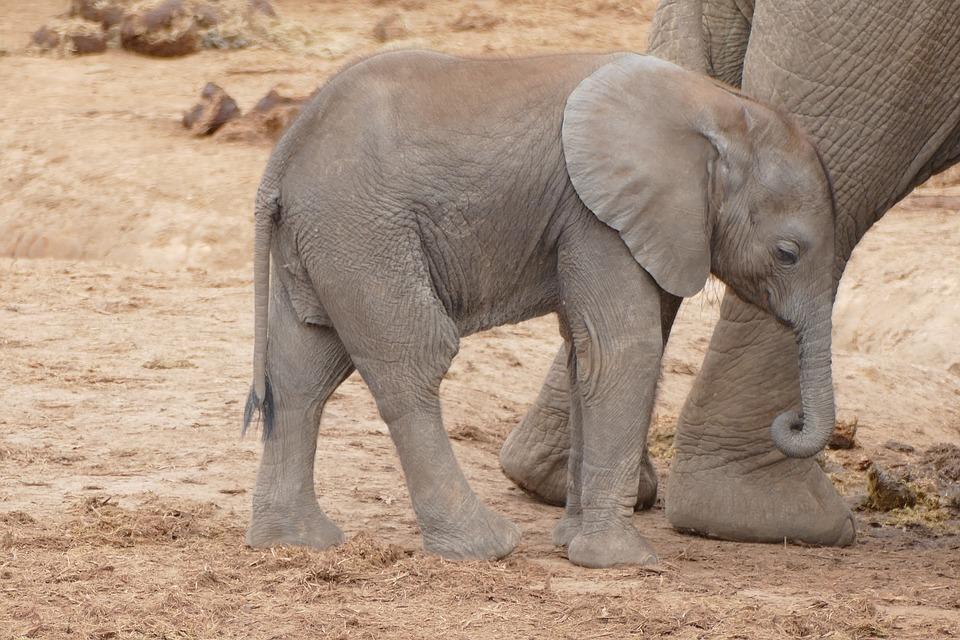 Parque nacional de elefantes de Addo