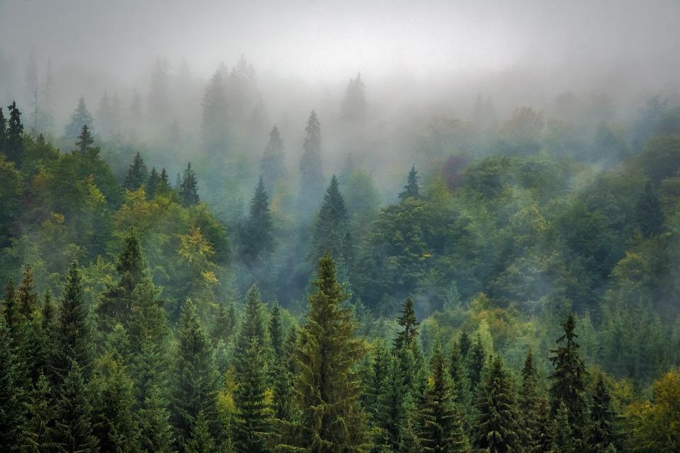 Naturaleza Rumanía